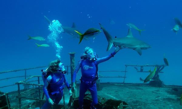 Fotograma del documental Las Maravillas del Mar